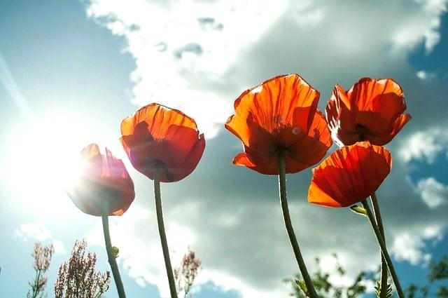 flower-399409_640-min