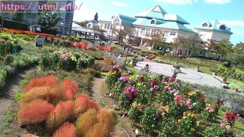 新潟ふるさと村のバザール館で食事!ダリア畑と錦鯉の池がある道の駅。